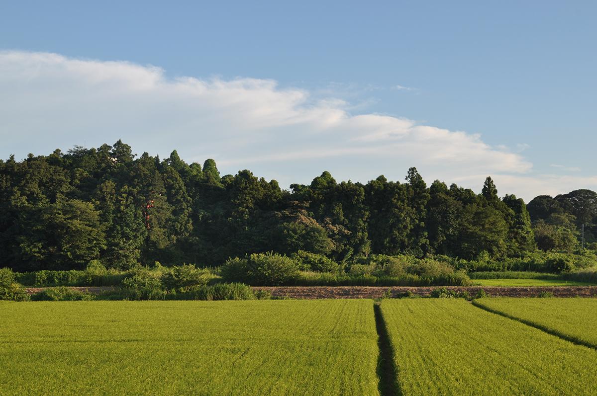 """""""Shimohiro-oka, Tsukuba"""" D5000 AF-S DX Nikkor 35mm f/9"""