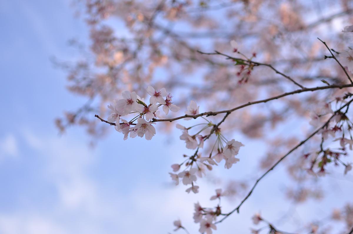 """""""Nakane, Tsukuba"""" NIKON D5000 AF-S DX Nikkor 35mm f/1.8G"""